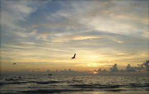 pelican sunset MGD©